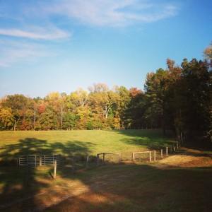 pasture.1